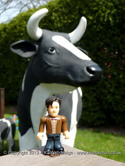 The Doctor and a cow