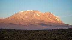 Kilimandjaro - Jour 3 - Shira 1 - 083