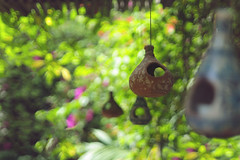 Hanging in a jungle of chaotic bokeh [EXPLORE] (  Haroon  ) Tags: home nature chaos order bokeh birdhouse peaceful odc vision:flower=0834 vision:outdoor=0712 vision:plant=0984