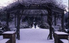Sarah P. Duke Gardens Pergola in the Snow, undated (Duke University Archives) Tags: winter snow nc durham terraces footprints wisteria pergola sarahpdukegardens