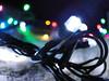 (nicolemagagnin) Tags: christmas xmas dog lights book christmaslights theperksofbeingawallflower