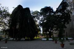 008985 - Praga (M.Peinado) Tags: canon rboles praha praga palmeras bancos castillo jardn chequia esko eskrepublika 2013 ccby r canoneos60d repblicachecha 06092013 septiembrede2013