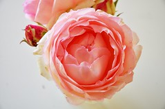 Sospensioni (fiumeazzurro) Tags: fiori bellissima imagepoetry diamondclassphotographer flickrdiamond anthologyofbeauty