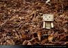 danbo_116 (iskandarbaik) Tags: park uk autumn trees england tree cute home forest toy photography leaf woods bokeh outdoor manga cardboard autumnal yotsuba danbo danbooru revoltech danboard cardbo danboru