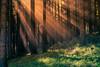 Sunbeam (Galerie-EF) Tags: wood light sun color tree nature canon licht nebel beam mystical sonne wald soe baum 5dmarkii ringexcellence dblringexcellence photographyforrecreationeliteclub