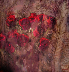 ))) roses ((( (xandram) Tags: roses love photoshop branches textures