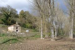 San Laviano Martire