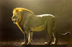 groot constantia (www.wbayer.com - www.facebook.com/wbayercom) Tags: painting big five lions wineries grootconstantia kapstadt constantia southafrika davidbucklowpeinture lecape steenbergtokai