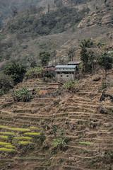 From Tibet and the Friendship bridge in Kodari border crossing, you move towards Kathmandu pass beautiful paddy fields and valleys of the Bhote Koshi river . (eriktorner) Tags: charity trip nepal im january compassion visit tibet aid tibetan soir nepali 2011 newari bistnd individuellmnniskohjlp bistndsorganisation hjlptillsjlvhjlp medmnsklighet imsoir developmentassistance eriktrner imsbildarkiv swedishorganisationforindividualrelief