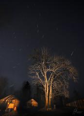 Round and Round (Jonathan Ma.) Tags: world seattle longexposure light tree nature night stars peace trail round