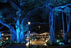 Waikiki - Banyan Tree - 2017 (tonopah06) Tags: hawaii hi honolulu 2017 moanasurfrider banyantree banyan tree beachbar night