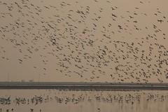 landing (PawL23) Tags: petchaburi saltfields murmuring birds sunrise goldenhour thailand reflection asia