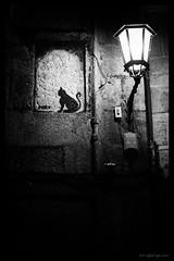_IMG8372 Nocturna con gato (Rafael Ojea) Tags: gatos nocturnas pentaxk1 pentax bn blancoynegro bw pentaxart pentaxsmc