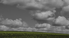 Spring on the Downs (hall1705) Tags: springonthedowns clouds cloudscape yellow oilseed rapeseed selectivecolour panasoniclumix nature outdoor downs westsussex field sky