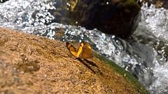 ... (Leandro Morais Soares) Tags: lumia950xl borboletas