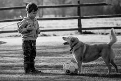 Football Buddies (jayneboo) Tags: 365 ben ed boy friend child mono dog ball play game grandson bw