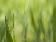 Couleur de saison **---+ (Titole) Tags: green minimalism titole grasses nicolefaton shades thechallengefactory 15challengeswinner