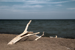 The Tip of Long Point - Point Pelee National Park (Ontario, Canada) (Andrea Moscato) Tags: andreamoscato canada america acqua water lago lake erie freshwater wood legno tronco sand sabbia spiaggia beach shore waves onde sky cielo clouds blue white brown shadow light nature natura nuvole natural naturale np nationalpark paesaggio parco park landscape vivid day