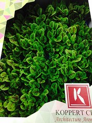 Vene Cress, Import