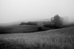 Nebbia sulla contea (Fabio Polimadei) Tags: blackandwhite countryside landscape fog morning campagna nebbia panorama biancoenero