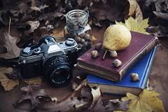 Decadere (davelawrence8) Tags: 5d 2015 autumn fall home horton mi usa stilllife naturemorte canonae1 decay harvest