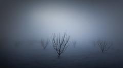 Frozen silence III (ilias varelas) Tags: frozen silence ilias light landscape land mood nature varelas greece atmosphere trees mist fog field snow winter