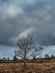 Sky. (CWhatPhotos) Tags: moor gorse bush trees tree yellowflowers flower sky photographs selfie have it photograph pics pictures pic picture image images foto fotos photography artistic that which contain digital cwhatphotos waldridge north east england uk fell wood woods countryside nature views view olympus four thirds camera