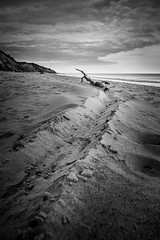 Trail (uk_dave) Tags: covehithe beach blackandwhite nikkor18200mm suffolk