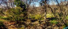 Panorama 3239_blended_fused_pregamma_1_mantiuk06_contrast_mapping_0.1_saturation_factor_0.8_detail_factor_1 small (bruhinb) Tags: panorama hdr philadelphia pa usa chestnuthill morrisarboretumoftheuniversityofpennsylvania arboretum northwesternave forest trees rocks garden japanese