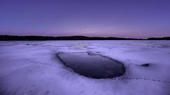 Tracks on ice (Kari Siren) Tags: track ice water pond black grouse full moon karijärvi jaala finland laowa 15mm lens