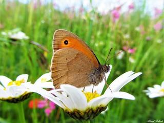 Butterfly 1188