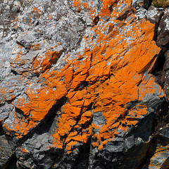Crusted (Danae Sheehan) Tags: rock antarctic colour pattern nature light detail square geology orange bright