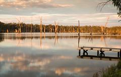 Lake Mulwala Sunset (laurie.g.w) Tags: lakemulwala sunset bundalong victoria waterway deadtrees sky reflections cloud water landscape