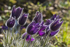 2016 P3306190 2048 (Dirk Buse) Tags: münster nordrheinwestfalen deutschland deu nrw botanischer garten schlossgarten uni olympus omd em5 ii mark2 markii mft m43 pro zuiko 40150 4015028 natur nature pflanze blüten outdoor