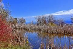 Sentier nature (Diegojack) Tags: paysages étang nature sentier morges roseaux