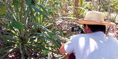 Team filming the coastal habitat #langkawiisland #wildlifedocumentary