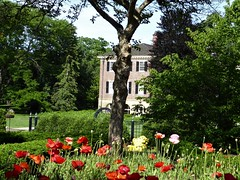 Wheaton, IL, Cantigny Park, Colonel Robert R. McCormick's Mansion with Red Poppies (Mary Warren (8.2+ Million Views)) Tags: wheatonil cantignypark garden nature flora plants red blooms blossoms flowers poppies tree architecture building house residence mansion robertrmccormick