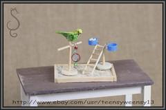 BUDGIEYG_Copy3 (Teensyweensybaby) Tags: budgie parakeet bird animal pet dollhouse ooak miniature flocked polymer clay hand made artist crafted mixed media art fibers feather