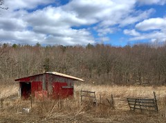 #Mikeliebler #nature #bluesky #tallgrass #MotherNature (mikeliebler222) Tags: mikey liebler mike ellington connecticut newengland fence color inthetallgrass clouds old fallingapart shack red field farm mikeliebler nature bluesky tallgrass mothernature