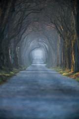 Baum-Tunnel (Fotos aus OWL) Tags: allee bäume tunnel alley landschaft owl kreislippe lippe