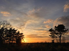 Woolmer Sunset - 19:24 (Marc Sayce) Tags: woolmer ranges forest conford whitehill longmoor south downs national park hampshire sunset sundown trees april spring 2017