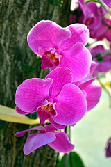 Orchids at Houbi Railway Station, Taiwan (Mark Tindale) Tags: houbi railway station taiwan tainan houbidistrict 後壁 菁寮 jingliao charming quaint villages tour cycling flower orchid tree