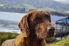 Miradas (Tato Avila) Tags: colombia represadeneusa perro dog animal hocico bigotes naturaleza aguas vida cielos nubes nikon neusa