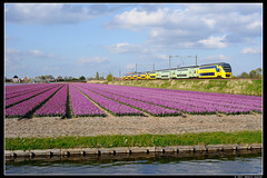 NSR-9568+9556_Hil_18042017 (Dennis Koster) Tags: nsr ns personentrein passagierstrein hillegom bollen