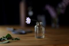 fragile beauty (L'hort de la Lolo | Agnès) Tags: violadellop violadepastor 50mm canoneos6d flower flowers purple little stilllife glass jam pot anemonehepatica herbafetgera window naturallight spring primavera fulles leaves petals pètals delicate fragile fragility delicacy depthoffield dof botany