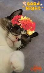 Tara (Melody Rubeli) Tags: cat chat animal bête kitty kitties chatte