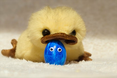 Grumpy the Chick and the Easter egg (FocusPocus Photography) Tags: ostern easter grumpy küken chick osterei easteregg stofftier stuffedtoy