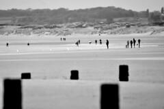Matchstalk men...... (pstone646) Tags: people beach blackandwhite shore monochrome sand sea view landscape panorama sussex camber