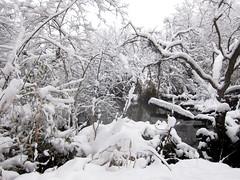 IMG_2840 (sjj62) Tags: s90 snow snowscape lith lakeinthehillsil winter winterscape