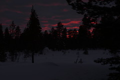 DAV_0478 Atardecer en Inari (David Barrio López) Tags: atardecer sunset aurora boreal auroraboreal northernlights auroraborealis polarlights circulopolarartico arcticcircle arbol tree pino reno reindeer poro nieve snow siida sajos sami holidayvillageinarihotel lomakyläinari inari ivalo laponia lapland finlandia finland nikon d610 nikond610 fullframe nikkor2470mm 2470mm afsnikkor2470mmf28ged davidbarriolópez davidbarrio